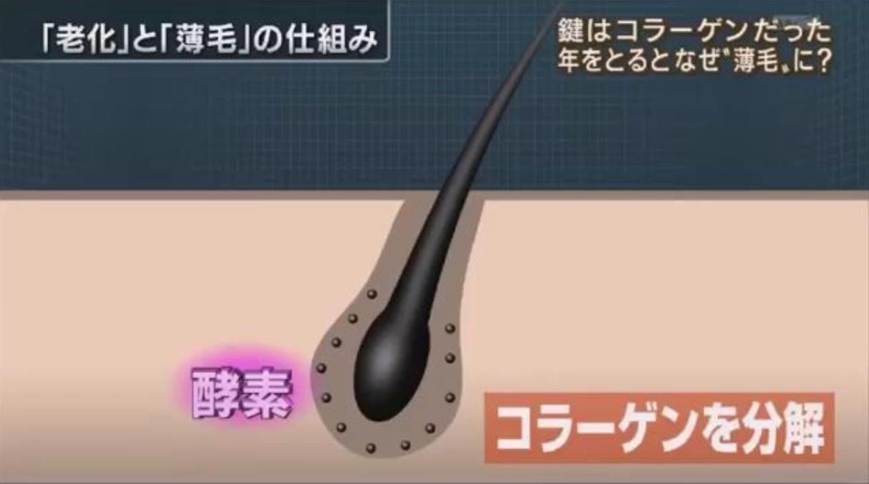 育毛とコラーゲンの関係性